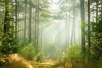 """Фотообои """"Солнце в лесу"""", Фактурная текстура (холст, иней, декоративная штукатурка)"""