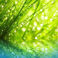 """Фотообои """"Трава над водой"""", Фактурная текстура (холст, иней, декоративная штукатурка)"""