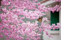 """Фотообои """"Цветущие ветви и бабочка"""", Фактурная текстура (холст, иней, декоративная штукатурка)"""