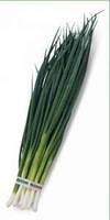 Семена лука на перо Вулкан 100 гр. Kitano Seeds