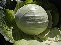 Семена капусты б/к Центурион F1 2500 семян Clause