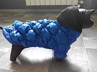 Куртка для собачек Dogs Bomba K-1 размер 3(XS-2)синяя