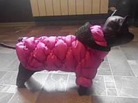Куртка Dogs Bomba K-3 размер 6(М)малиновая