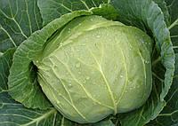 Семена капусты б/к ранней Дита F1 1 кг  Nasko