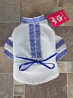 Вышиванка для йорка  Dogs Bomba Y-8 размер 2(XS) синяя