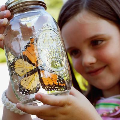 как ловить бабочек руками