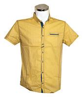 Рубашка мужская Punto батал желтая