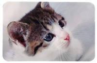 24545  Коврик под миску, фото кошки, 43 × 28 см