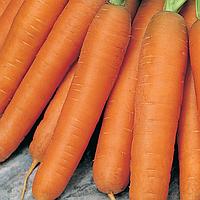 БАЛТИМОР F1 семена моркови Берликум PR 1млн (1,8-2,0 мм), Bejo Zaden