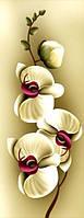 """Алмазная мозаика  """"Нежность орхидеи-2"""" Частичная выкладка 20х46 см"""
