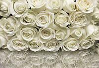 Фотообои бумажные на стену 368х254 см 8 листов: Розы белые. Komar 8-314