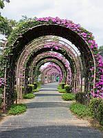 Цветочный арочный тоннель