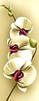 """Алмазная мозаика  """"Нежность орхидеи-1"""" Частичная выкладка 20х46 см"""