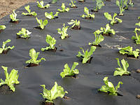 Агроволокно черное 50 г/кв.м (1.6м х 10м)