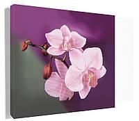 Орхидея. Картини. Основа (канва) для вишивки бісером. Вышиванка под рамку