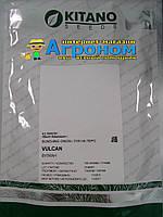 Семена лука на перо Вулкан F1, 100 гр, Kitano (Китано), Япония