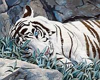 """Картина по номерам «Идейка» (КН2453) художественный творческий набор """"Белый тигр"""", 50x40 см"""