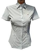 Блузка женская короткий рукав, принт
