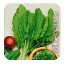 Семена щавеля широколистый Наско №734 F1 25 грамм Nasko