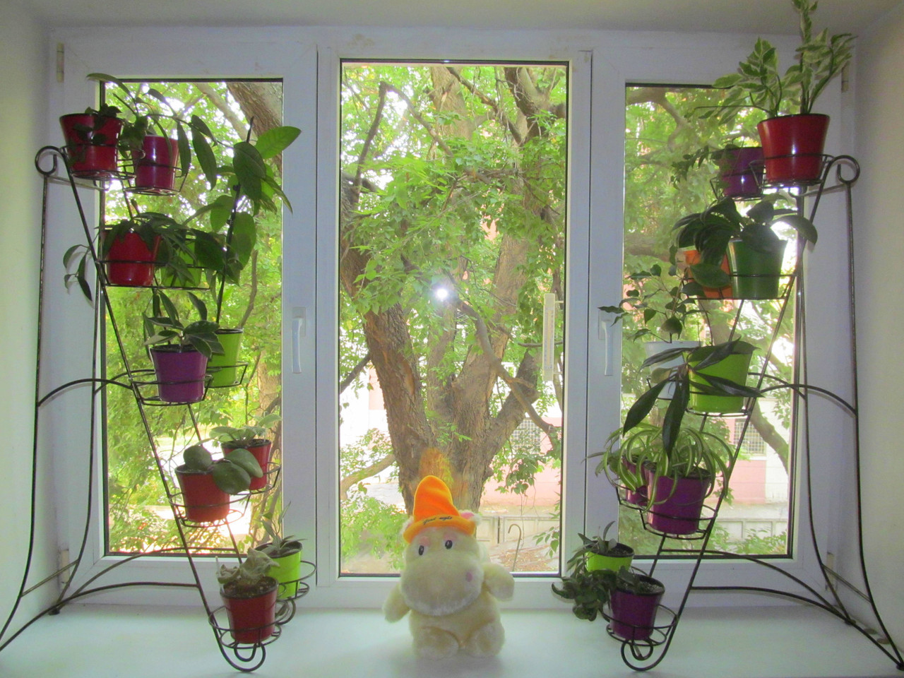 Подставки для цветов на подоконник Условия для выращивания цветов на окне 556
