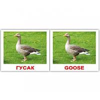 Комплект карточек Домашние Животные Domestic Animals МИНИ 40