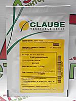 Семена капусты белокочанной Оракл F1, 2500 семян, Clause (Клоз), Франция