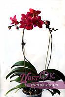 Опора-дуга для растений и орхидей, 45 см