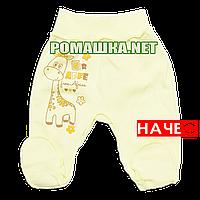 Ползунки (штаны) на широкой резинке демисезонные р. 56 с начесом ткань ФУТЕР 100% хлопок ТМ Алекс 3180 Желтый