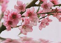 Фотообои на плотной бумаги для стен 272*196 см 8 листов: Цветы, Сакура №25