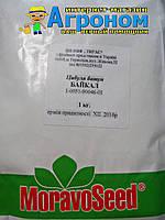 Семена лука на перо Байкал , 1 кг, Moravoseed (Моравосид), Чехия