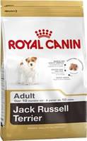 Royal canin сухой корм JACK RUSSEL ADULT 500гр для собак породы джек-рассел терьер от 10 месяцев