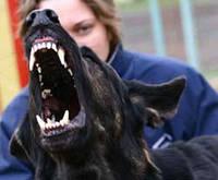 Антилай  ошейник  для  собак  купить Киев