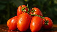 Дино F1 - семена томата детерминантного, Clause