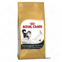 Корм для котів (Роял Канін) ROYAL CANIN Norwegian Forest Cat 10 кг - для дорослої Норвезької лісової кішки