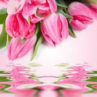 Косметические отдушки для мыла, свечей, косметики ручной работы тюльпан