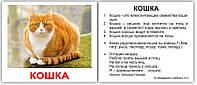 «Домашние животные с фактами» МИНИ 40