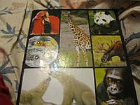 Книга о животных  фото  набор альбом перекидной фауна