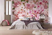Фотообои на стену «Цветы розы». Komar 8-937 Rosa