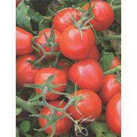 9661 F1 семена томата дет. раннего 90-100 г Lark Seeds 500 сем