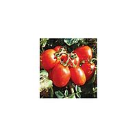 Марисса Нова F1 семена томата индет. раннего слив. 90-130 г Lark Seeds 5 000 сем