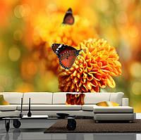 "Фото обои ""Бабочка на хризантеме"", Фактурная текстура (холст, иней, декоративная штукатурка)"