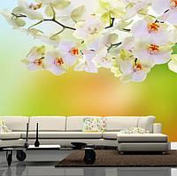 """Фото обои """"Белая орхидея"""", Фактурная текстура (холст, иней, декоративная штукатурка)"""