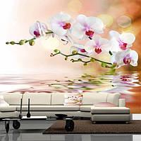 """Фото обои """"Белые орхидеи над водой"""", Фактурная текстура (холст, иней, декоративная штукатурка)"""