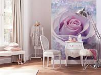 ФЛИЗЕЛИНОВЫЕ фотообои Komar xxl2-020 роза
