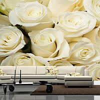 """Фото обои """"Белые розы"""", Фактурная текстура (холст, иней, декоративная штукатурка)"""