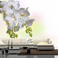 """Фото обои """"Ветка белой орхидеи"""", Фактурная текстура (холст, иней, декоративная штукатурка)"""