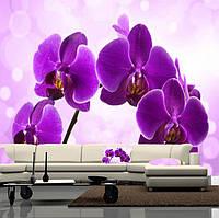 """Фото обои """"Ветка фиолетовой орхидеи"""", Фактурная текстура (холст, иней, декоративная штукатурка)"""