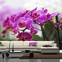 """Фото обои """"Веточка малиновой орхидеи"""", Фактурная текстура (холст, иней, декоративная штукатурка)"""