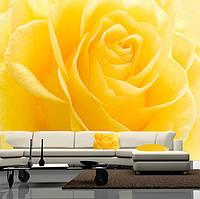 """Фото обои """"Желтая роза"""", Фактурная текстура (холст, иней, декоративная штукатурка)"""