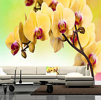 "Фото обои ""Желтые орхидеи"", Фактурная текстура (холст, иней, декоративная штукатурка)"